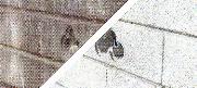 塀の丸洗い元画像2